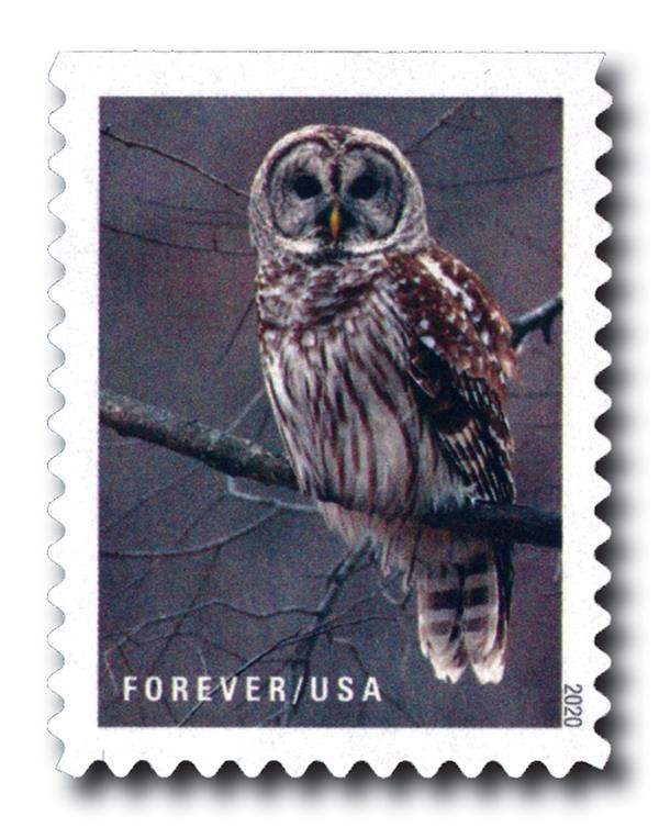 2020 First-Class Forever Stamps - Winter Scenes: Barred Owl