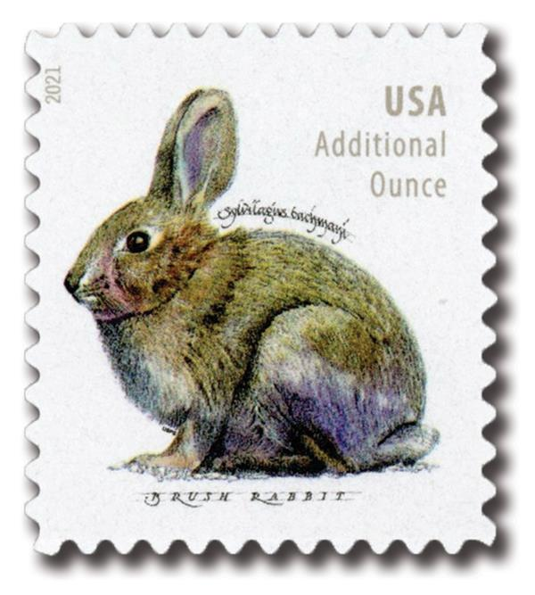2021 20c Brush Rabbit