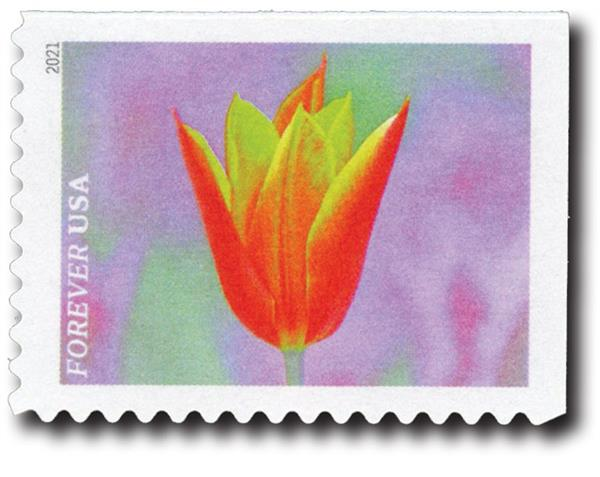 2021 First-Class Forever Stamps - Garden Beauty: Orange and Yellow Tulip