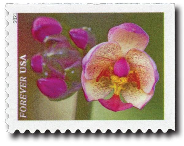 2021 First-Class Forever Stamps - Garden Beauty: Pink Moth Orchid