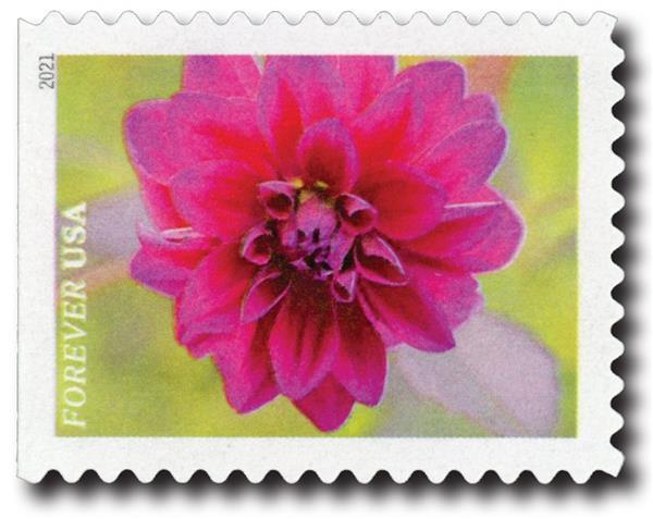 First-Class Forever Stamps - Garden Beauty: Magenta Dahlia