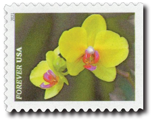 2021 First-Class Forever Stamps - Garden Beauty: Yellow Moth Orchid with Pink Center