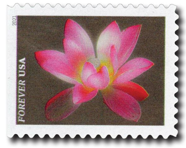2021 First-Class Forever Stamps - Garden Beauty: Pink and White Sacred Lotus