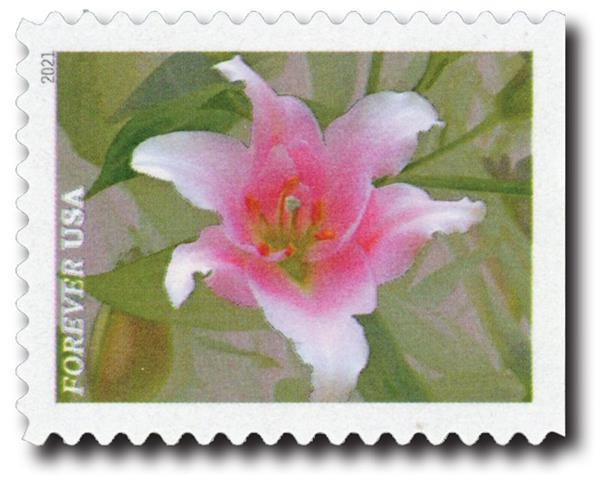 2021 First-Class Forever Stamps - Garden Beauty: Pink & White Asiatic Lily