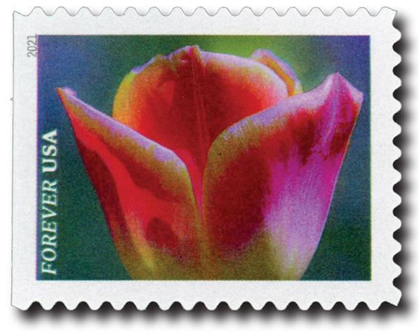 2021 First-Class Forever Stamps - Garden Beauty: Rose-pink and White Tulip