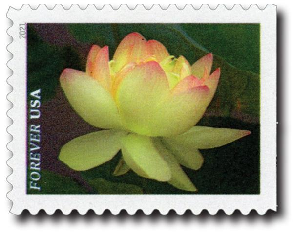 2021 First-Class Forever Stamps - Garden Beauty: Yellow and Pink American Lotus