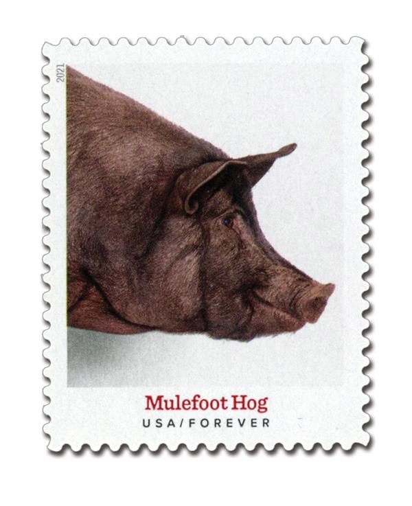 2021 First-Class Forever Stamp - Heritage Breeds: Mulefoot Hog