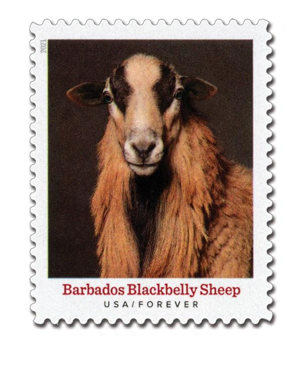 2021 First-Class Forever Stamp - Heritage Breeds: Blackbelly Sheep