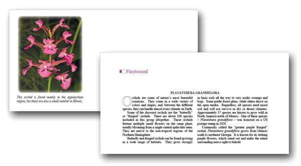 2020 Platanthera grandiflora