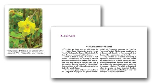 2020 Cyrtopodium polyphyllum