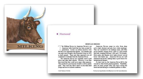 2021 Milking Devon Cow