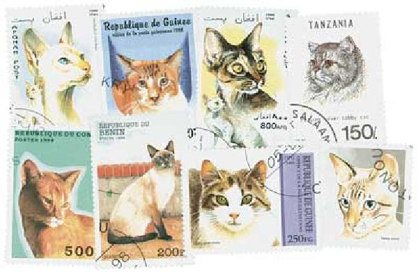 Cats, set of 50 used