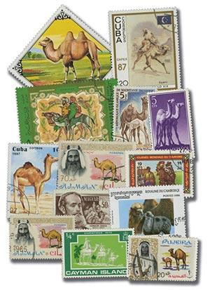 Camels, 25v
