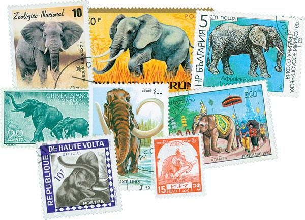 Elephants, 50v