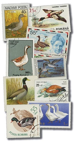 Ducks, 50v