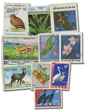 Flora & Fauna, 500v