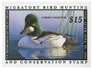 2013 $15 Common Goldeneye Hunting Permit