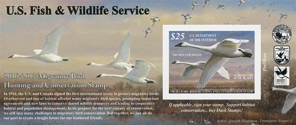 2016 $25 Trumpeter Swans s/a