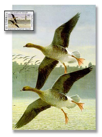 1995 UK Mint Presentation Folder w/Stamp