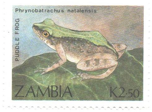 1989 Zambia